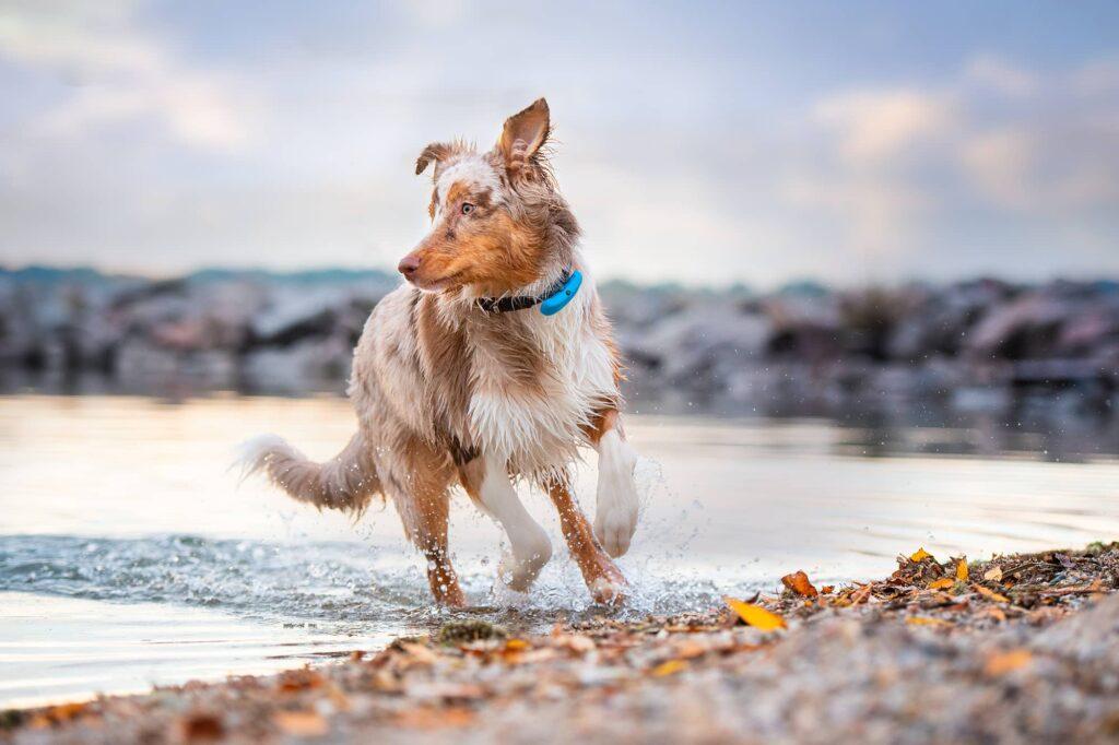 future of pet insurance